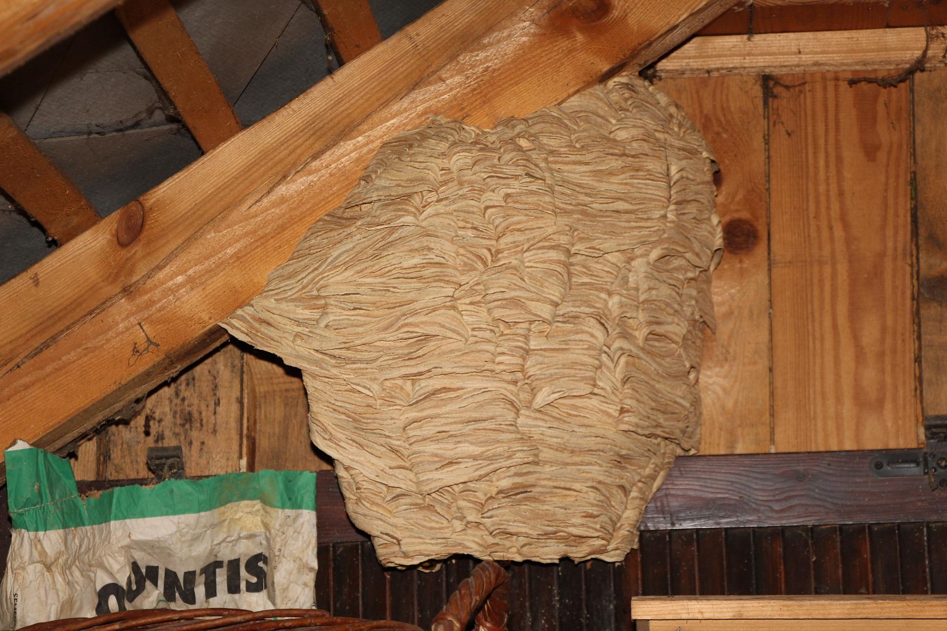exterminateur nid frelons asiatiques Pujols 33350