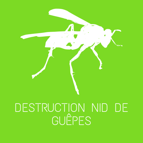 destruction nid de frelons gironde 33